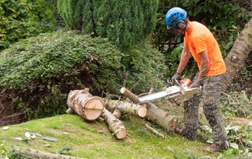 additional services offered by  tree surgeons