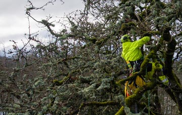experienced  arborists are needed
