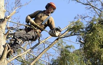 hiring experienced  tree surgeons