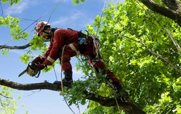 find trusted rated  tree surgeons