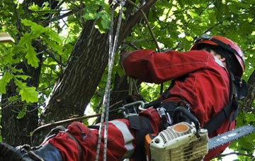 hiring professional  tree surgeons
