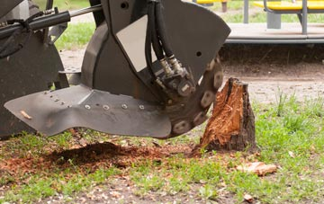 professional  stump grinding services