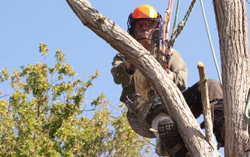 finding qualified  tree surgeons