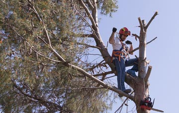reasons to consider  tree surgery