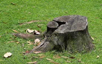 tree stumps are trip hazards and harbour insects