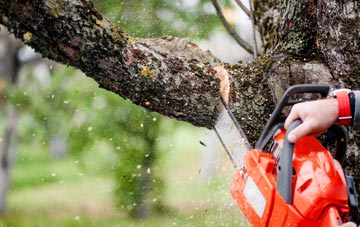 remove trees and branches at risk of falling onto children
