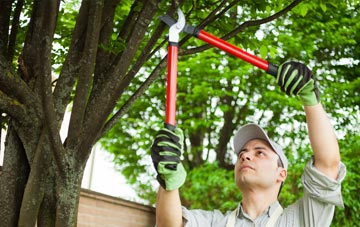 tree inspections and trimming help prevent falling branches