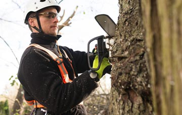 tree surgery costs
