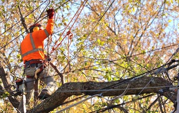 what is tree surgery?