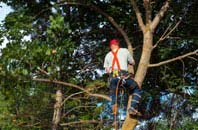 tree crown reduction services