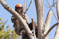 tree dead wooding services