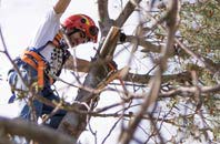 trusted  tree dead-wooding services