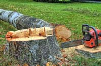 free  tree felling quotes