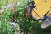 free  tree stump grinding quotes