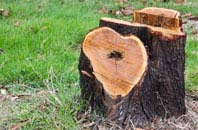 free  tree stump removal quotes