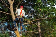 compare tree surgery costs